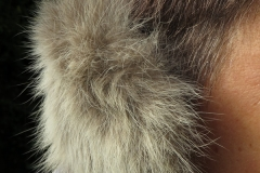 Ohrenschützer Rotfuchs